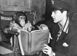 Elvis With Pet Chimp Scatter